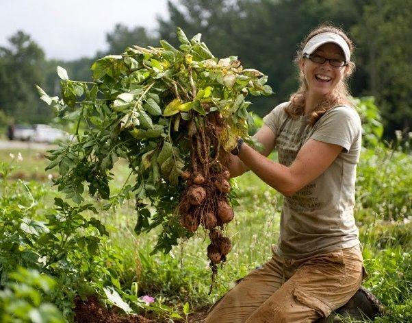 Giovani Agricoltori in Aumento