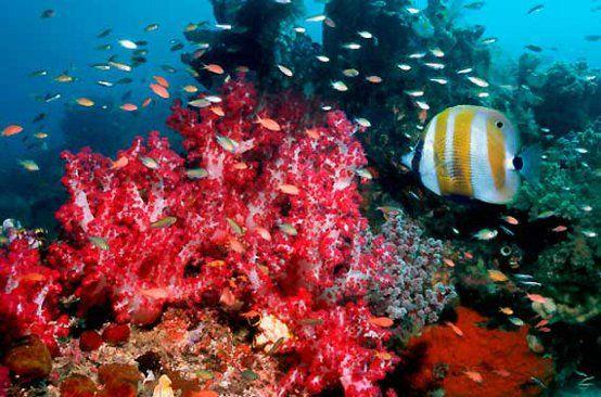 Barriere Coralline Danneggiate da Creme Solari
