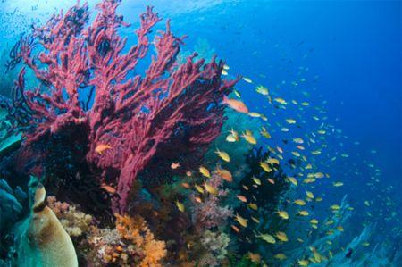 Rapporto WWF: un Terzo Siti Naturali a Rischio Estinzione