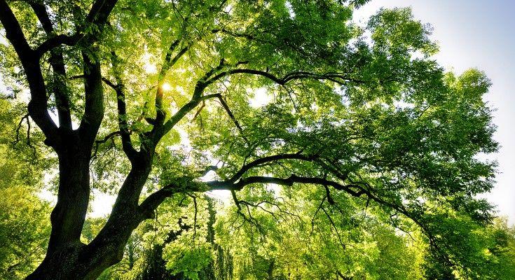 Giornata Nazionale Dell'albero 2015