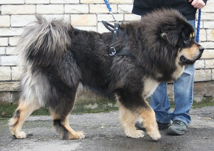 Cina, Nasce Fabbrica Clonazione Animali