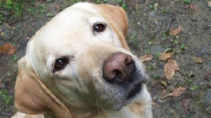 Cannella è morta: simbolo della pet therapy in Italia