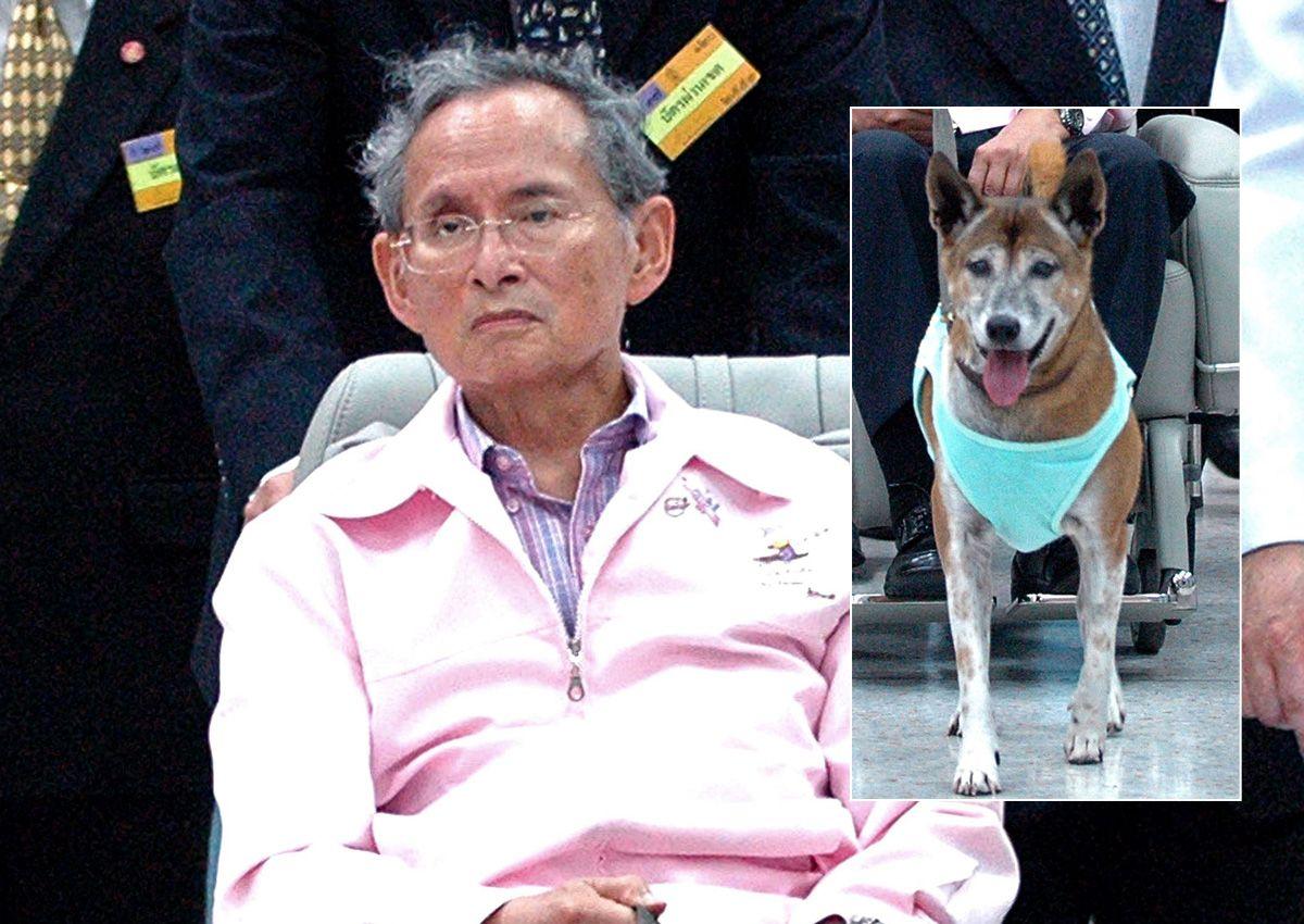 Thailandia: cane re Adulyadej muore
