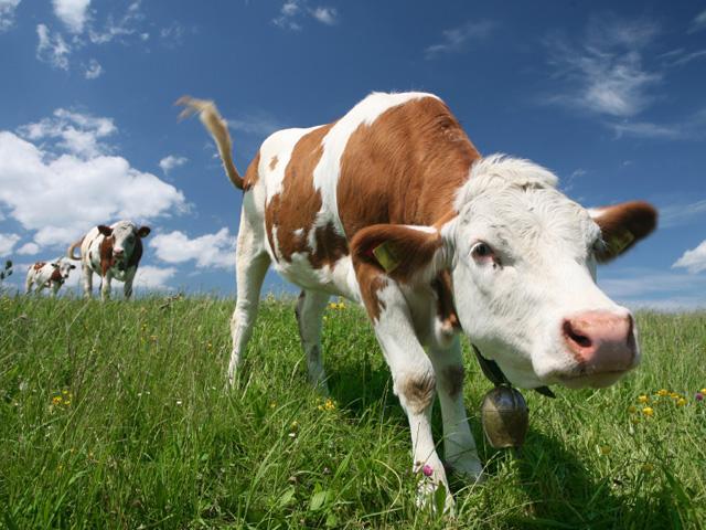 Bestiame in Estinzione: Fao Lancia Monito