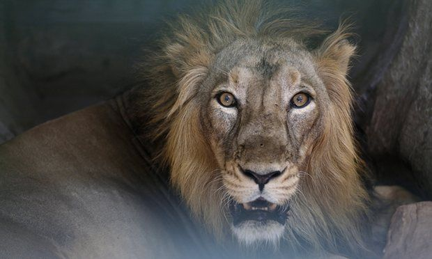 Cerca di suicidarsi nello zoo di Santiago