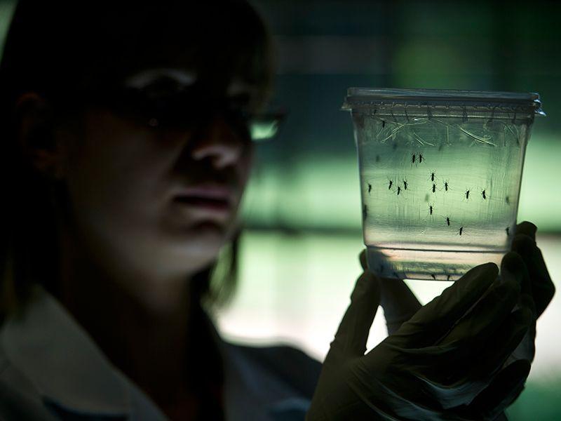 Virus Zika causa danni neurologici ai neonati