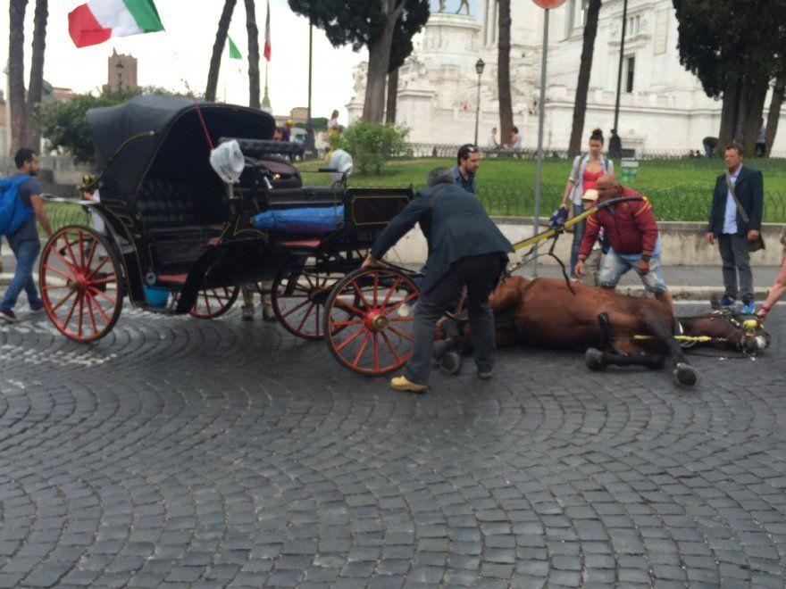 Roma, cavallo cade: animalisti indignati