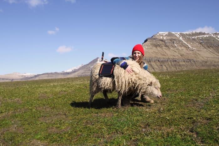 Sheep View 360: pecore per mappare Isole Far Oer